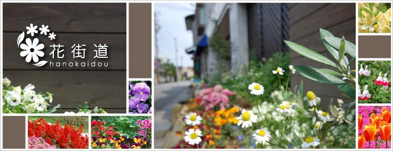 1人1人が慈しむ、たった1鉢の花が連なって美しい花街道が生まれます。『花を観て楽しむ・育てて楽しむ・話し合う』という楽しみは、安心して暮らせる心豊かなまちを、認めあい、尊敬しあうまちを創ってゆきます。お花の好きな方達と情報交換しながら、花いっぱい運動を続けていきたいと思っています。<br />